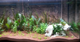 Fleischfressende Pflanze Terrarium