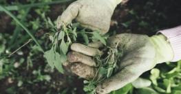 Fleischfressende Pflanze Pflege